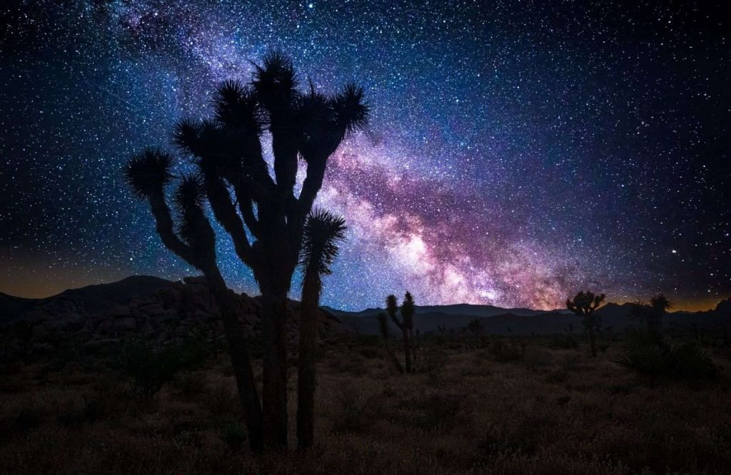 The best getaways on the West Coast include Joshua Tree National Park.