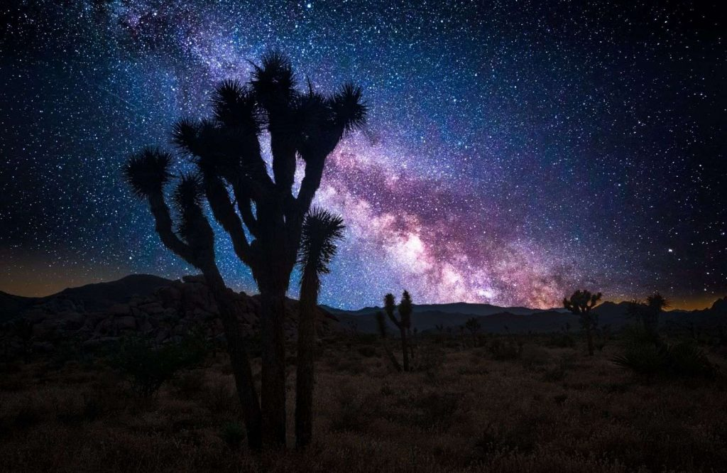 Joshua Tree National Park is one of the most unique day trips from Las Vegas.