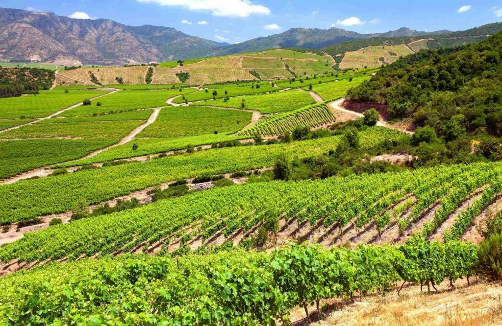 Colchagua Valley is the perfect underrated destination to add to your bucket list for couples.
