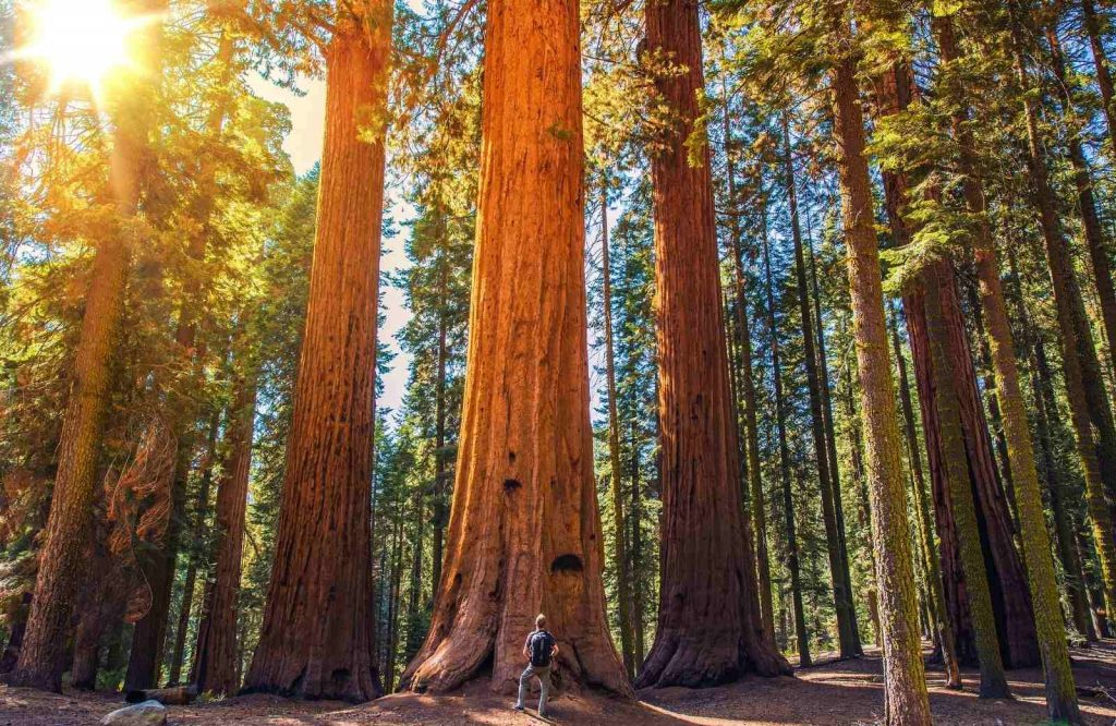 Sequoia National Park is one of the best national parks on the West Coast.