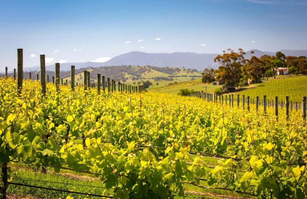 Yarra Valley is one of the coolest day trips from Melbourne.