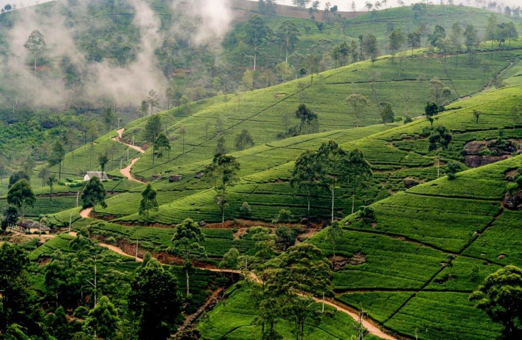 Sri Lanka is one of the most majestic islands in Asia.